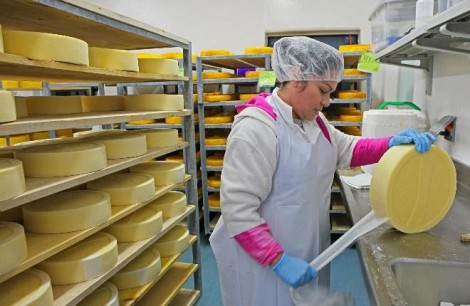 (photo by Michael Sears) Maria Aguirre removes cheese cloth from cheese at Saxon Creamery, which makes artisan cheeses including some raw-milk cheeses. The company also makes many types of cheeses from pasteurized milk.