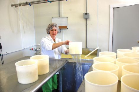 (By Tony Russo)Cheesemaker and owner of Chapel's Country Creamery, Holly Foster, transfers the curds for Bay Blue Cheese into molds where they will settle into rounds and be set in the aging room to finish.